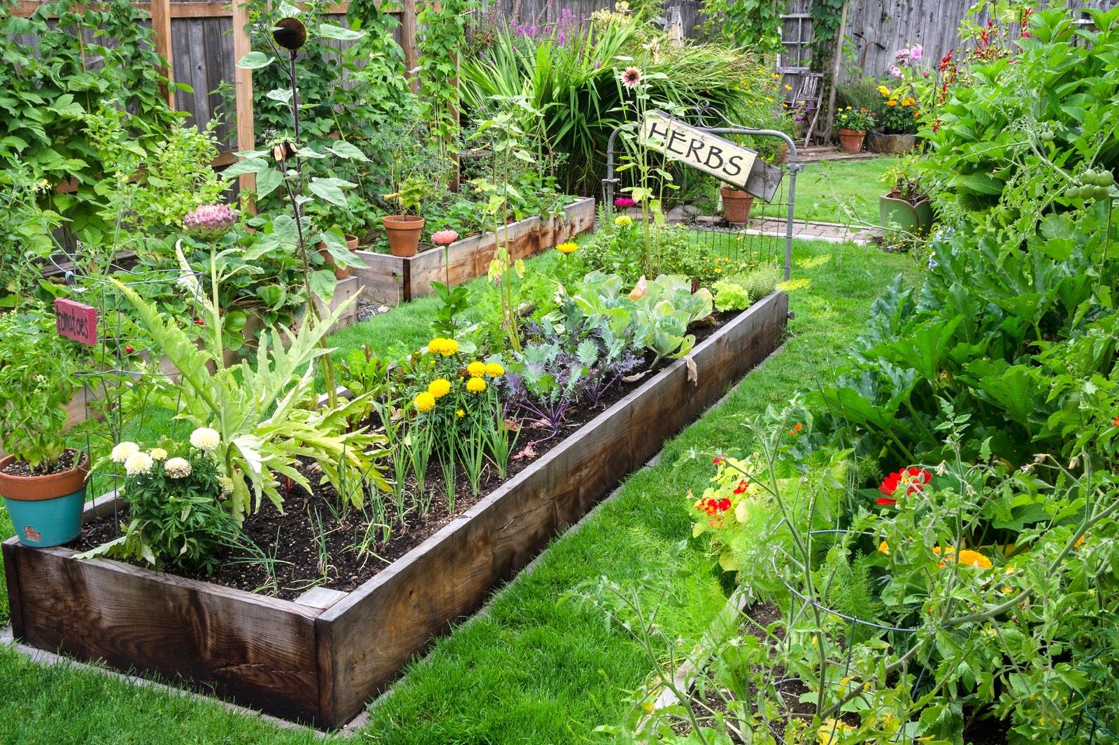 Tuin met moestuin erin