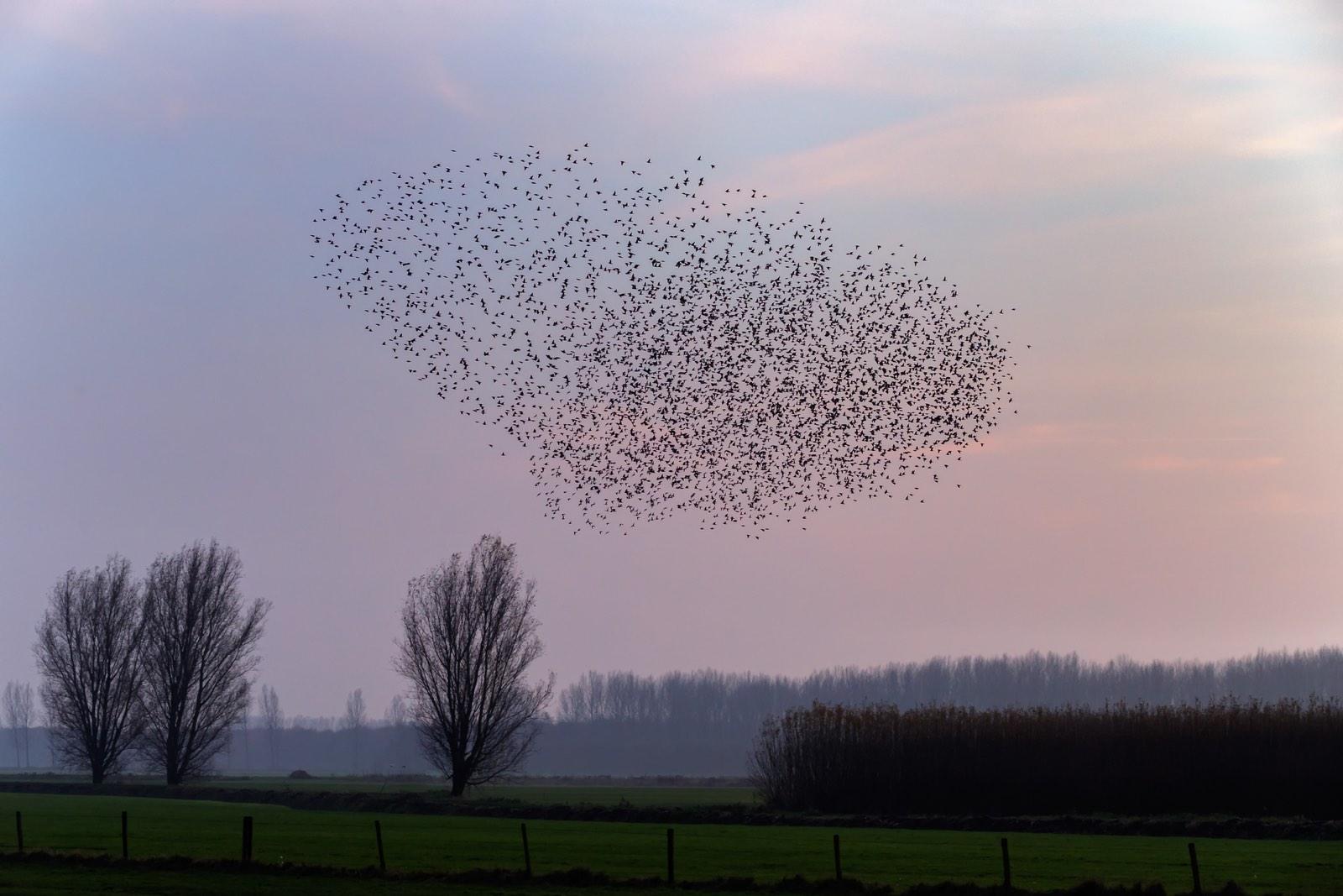 zwerm vogels in landschap als silhouet