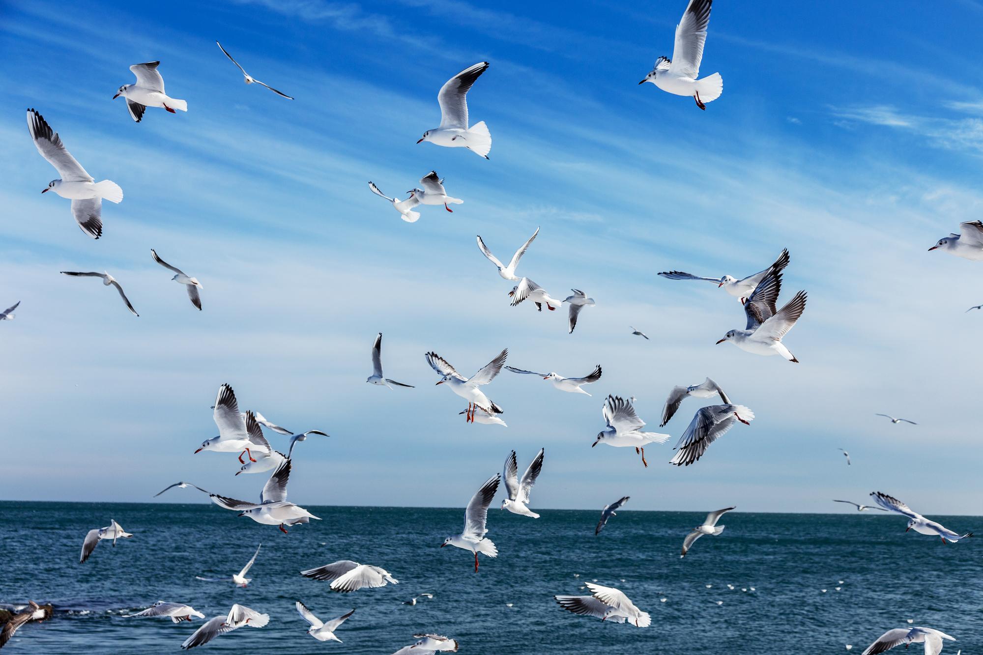 Zwerm witte vogels boven zee