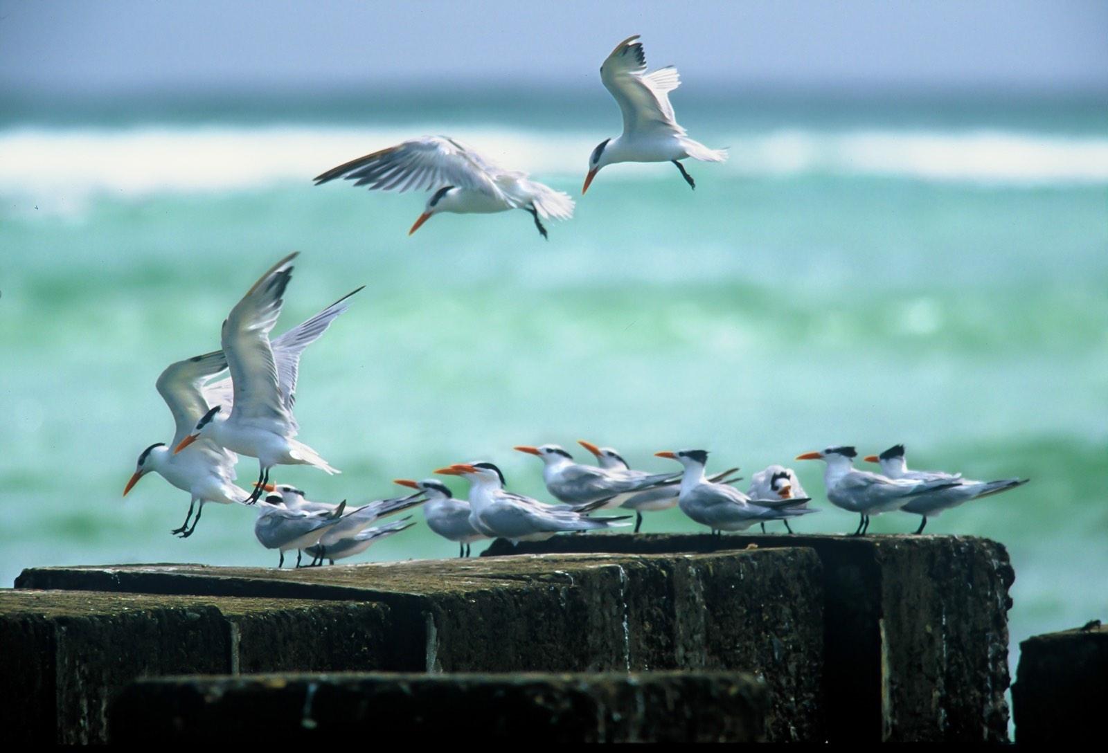 meeuwen landen bij kust op kade