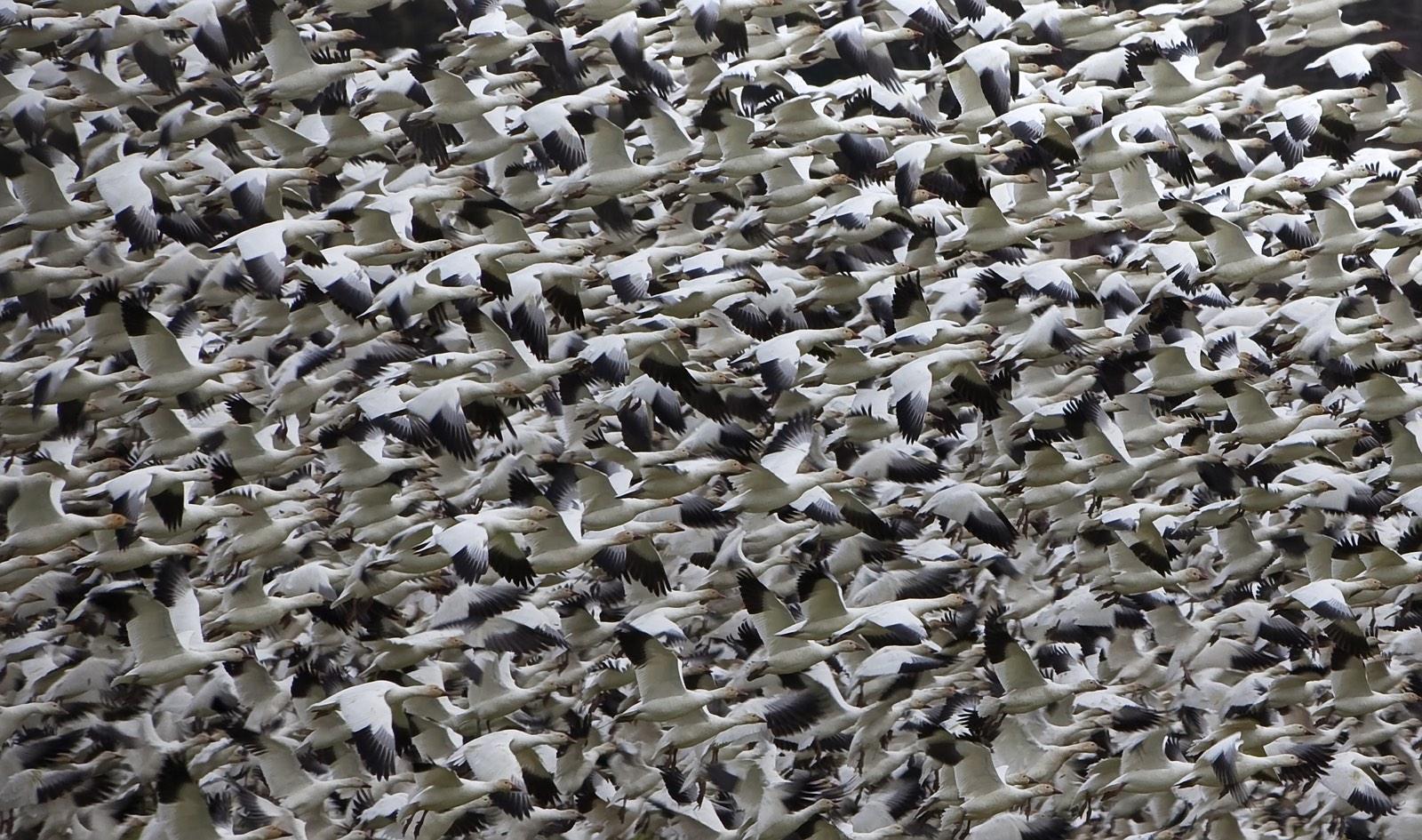 vogels als patroon