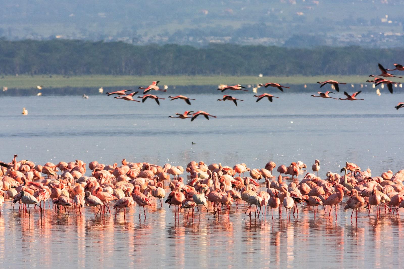 pelikanen bij water en land op achtergrond