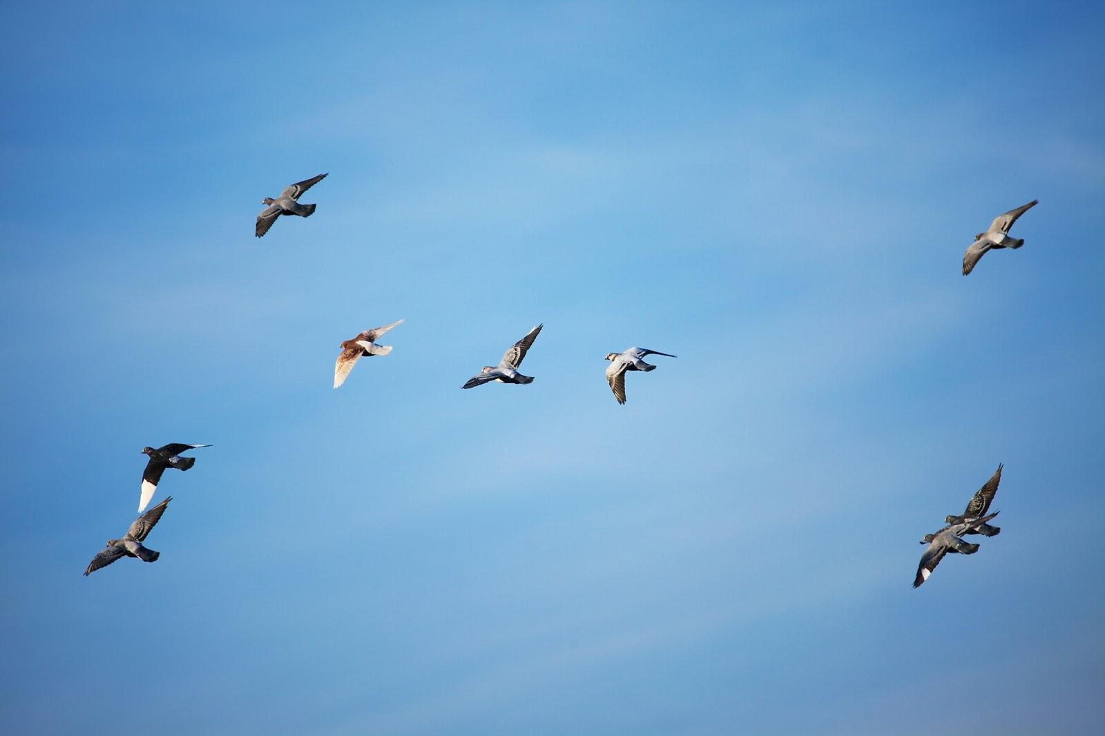 vogels glijden in blauwe lucht