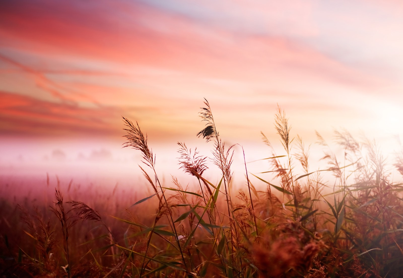 Vroege ochtend landschap met gras en wolken rood