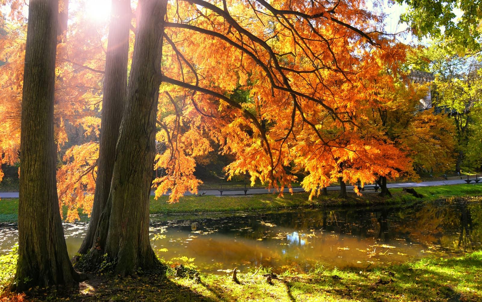 Bomen met herfstgebladerte met water in park