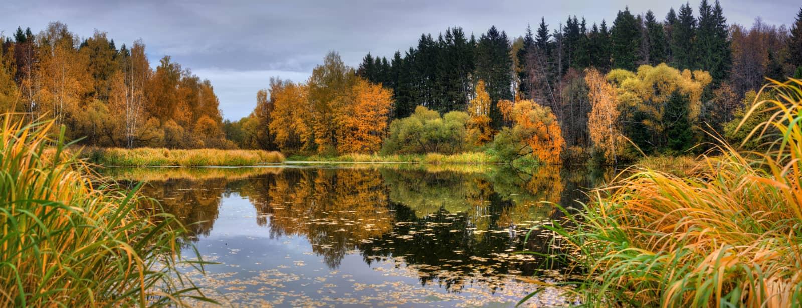 Een plas met bomen eromheen in herfstkleuren
