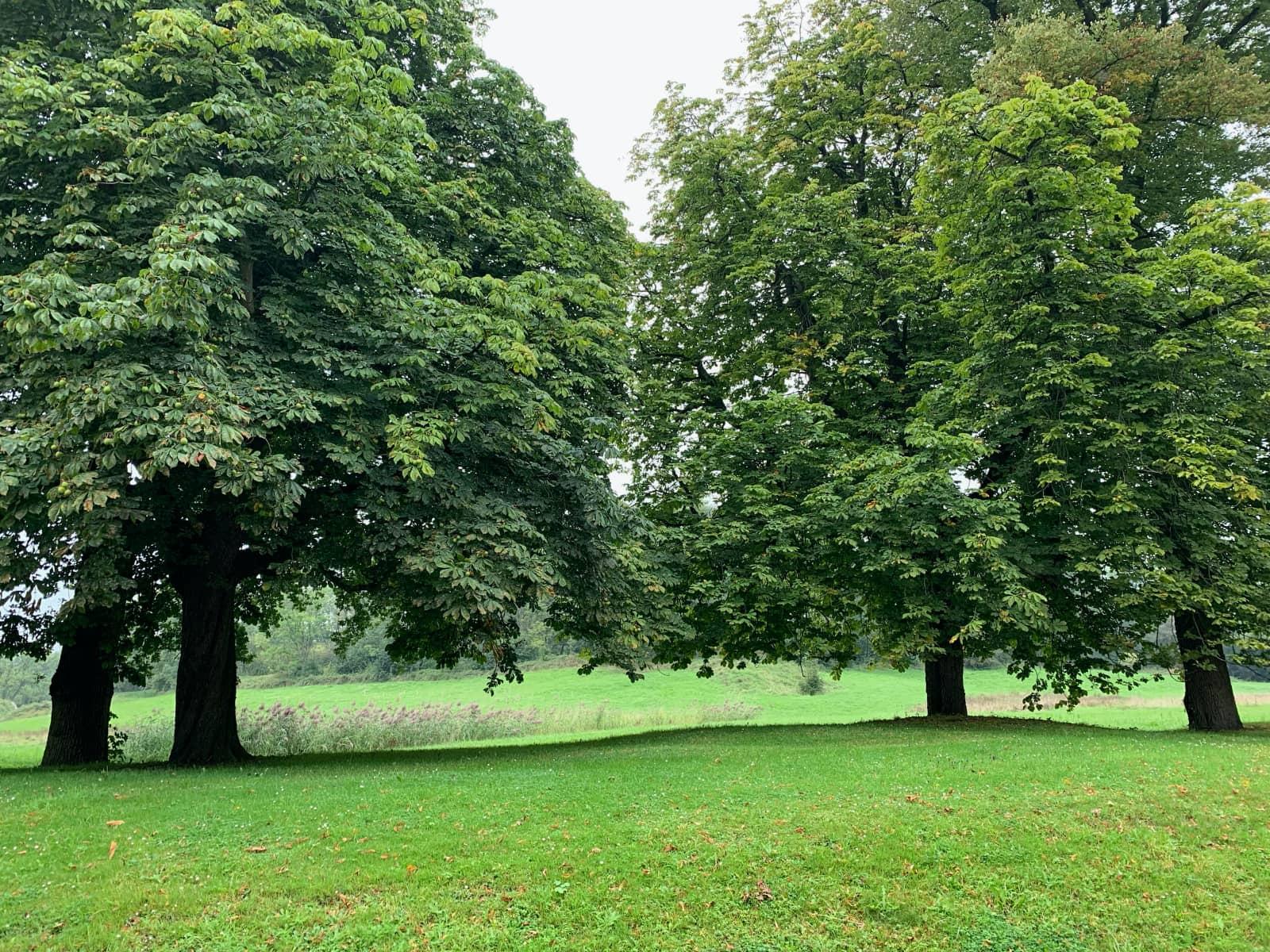 Vier bomen groot en groen