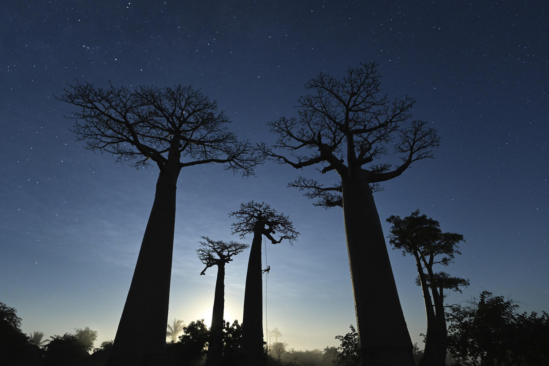 foto: © Marsel van Oosten/tpoty.com - Madagascar: Avenue des Baobabs