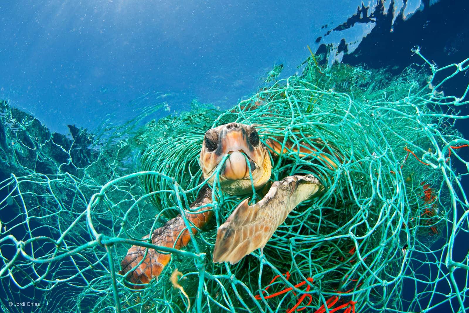 Schildpad vast in net op bodem zee, foto van Jordi Chias