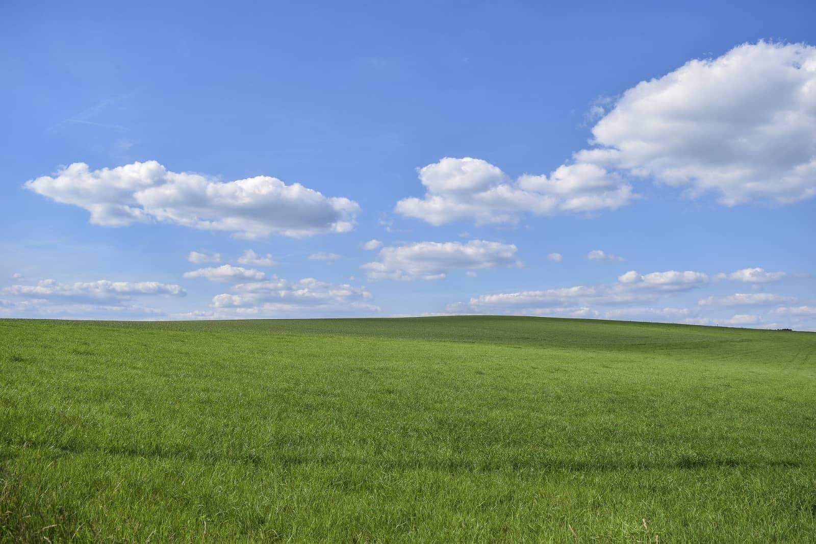 Grasveld met blauwe lucht en wolken door Michael Gaida