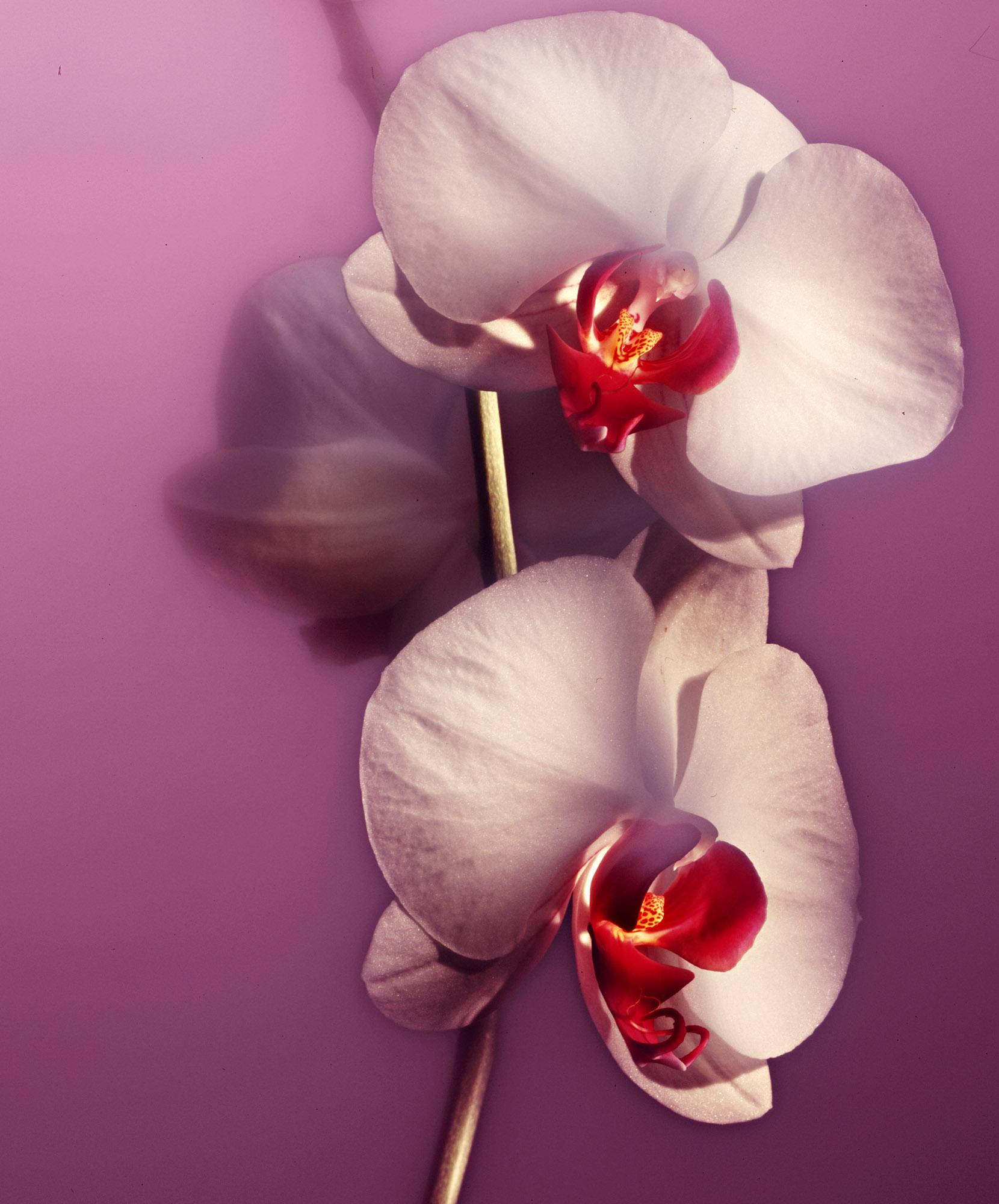 foto: © Alex de Smit - Orchidee met lightpainting techniek