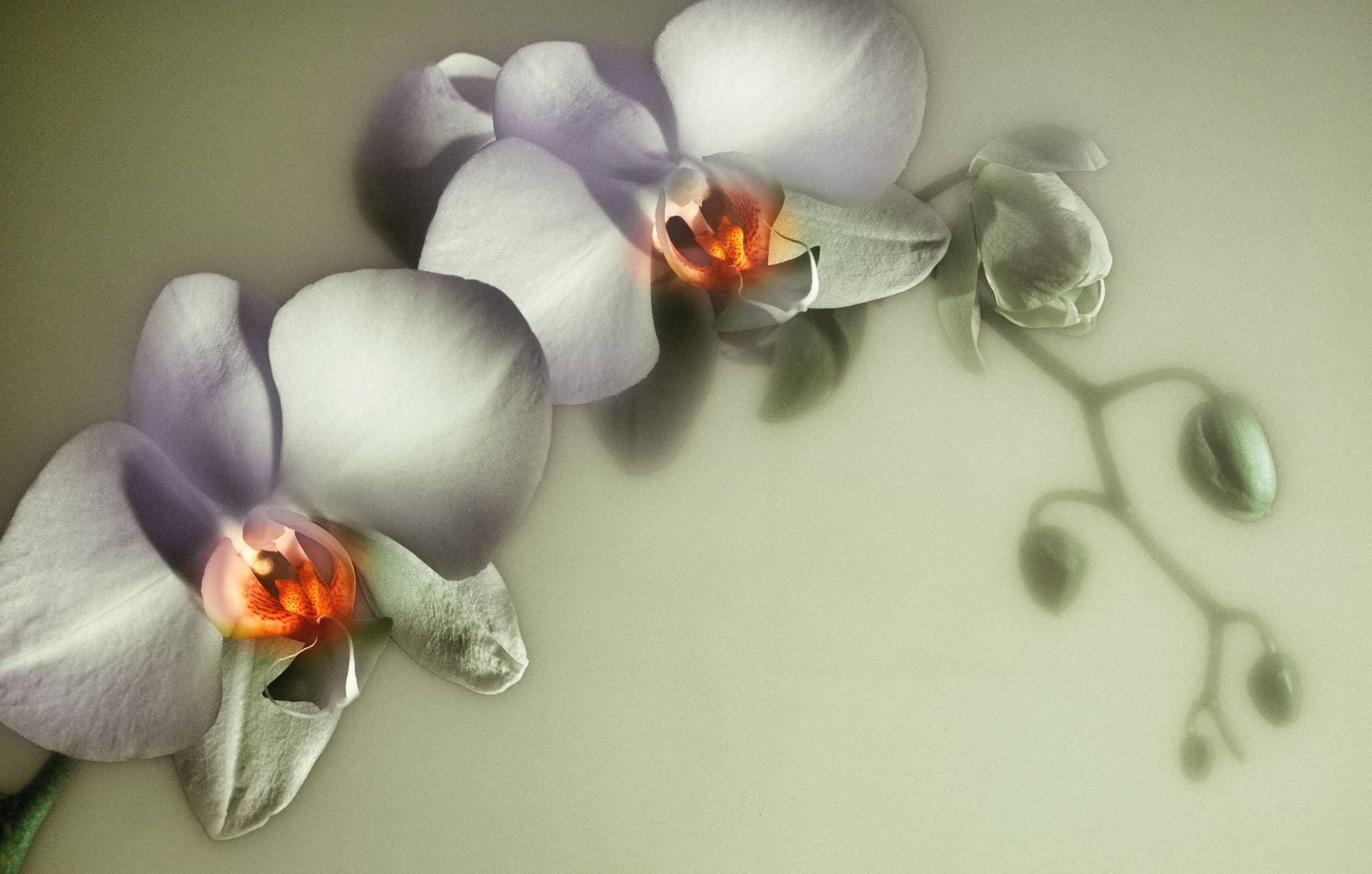 Orchidee gefotografeerd met techniek lightpainting door Alex de Smit