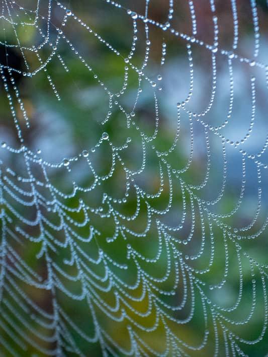 Tips voor het fotograferen van spinnenwebben