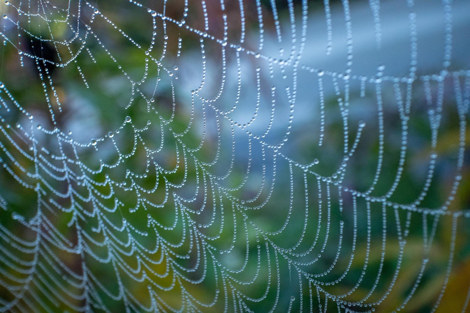 spinnenweb macro met druppels