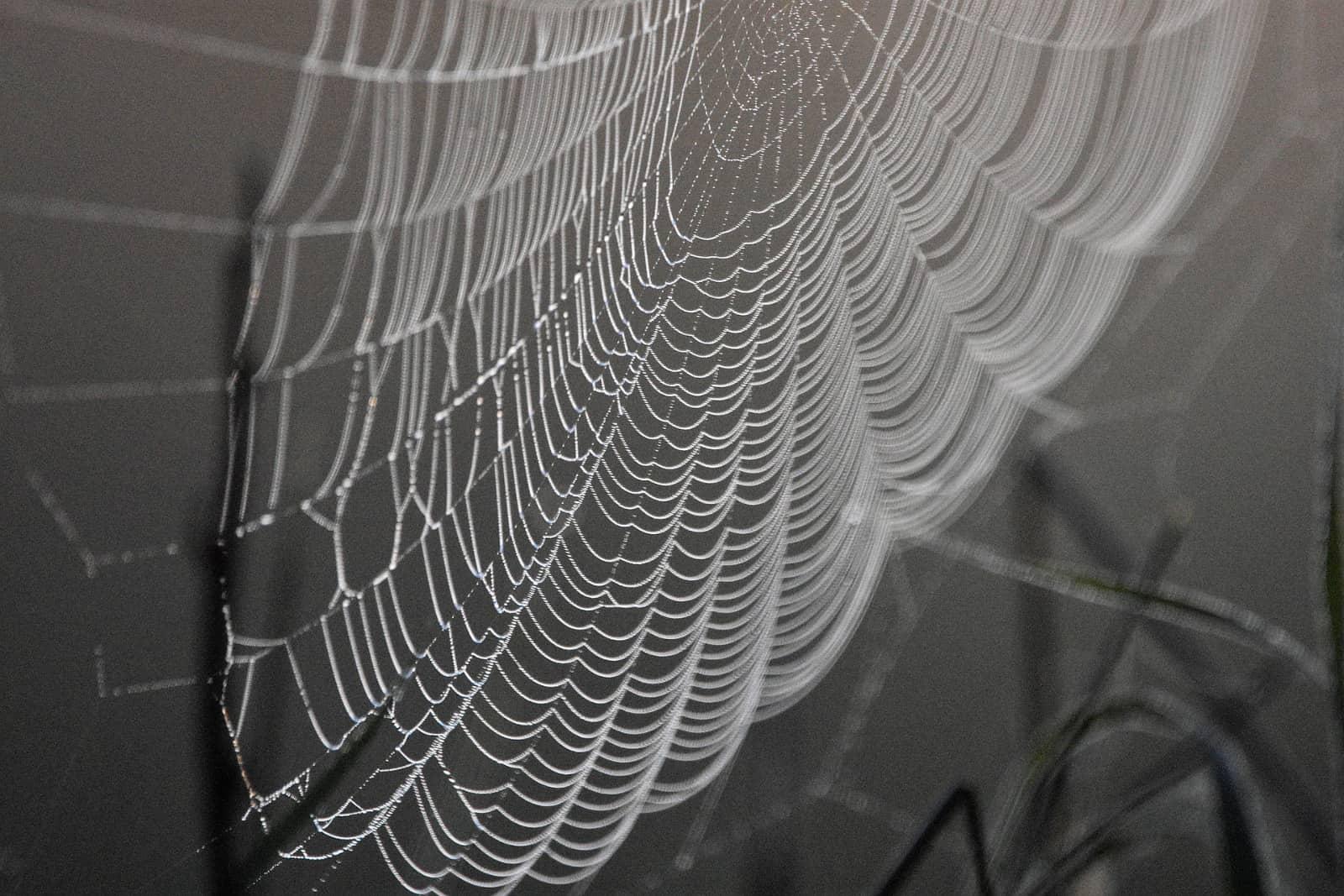 spinnenweb tegen bruine achtegrond