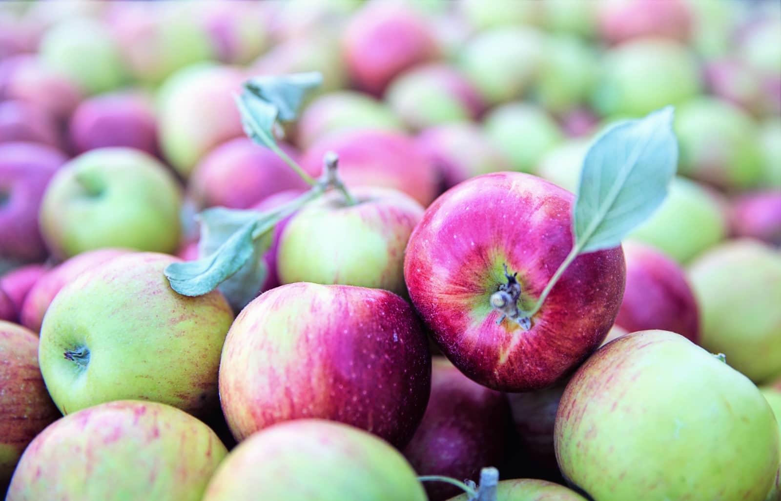 Jill Wellington via Pixabay - groen paarse appels