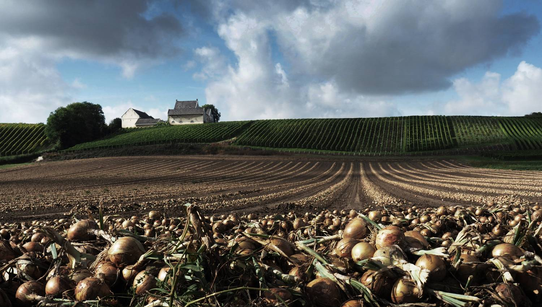 Fotowedstrijd Herfst 2020 op Fotografie.nl