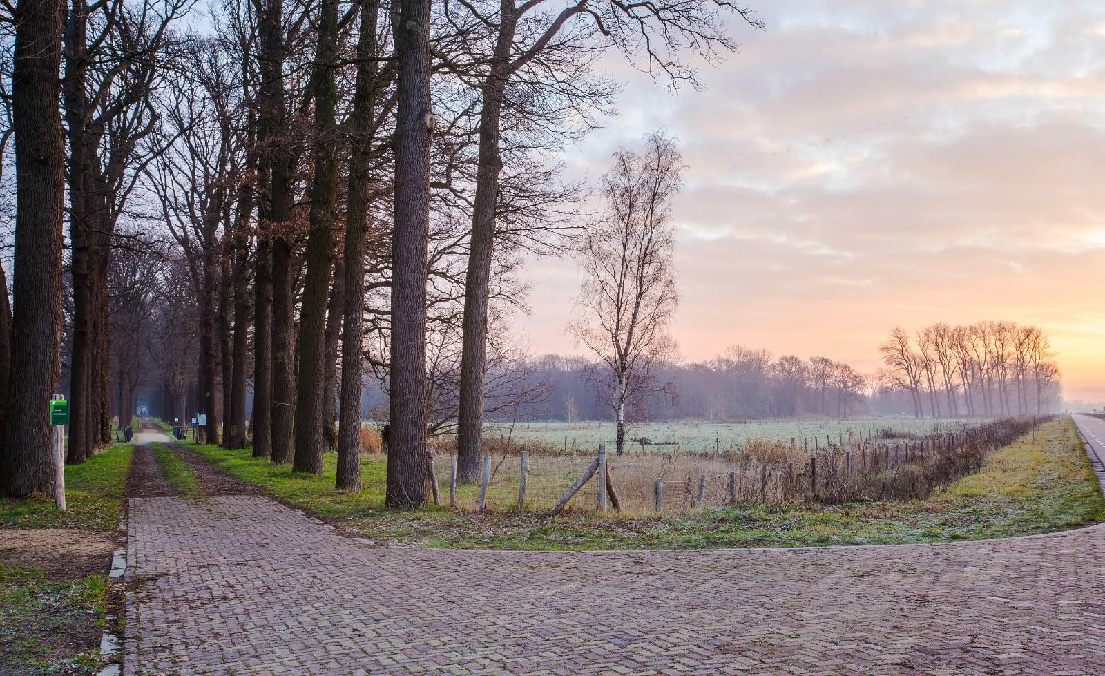 paden die scheiden in Hollands bos met zonsondergang