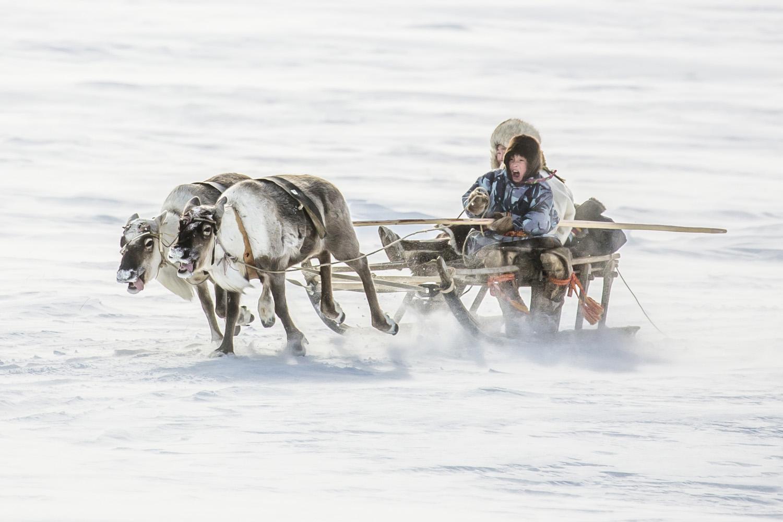 foto: © Vladimir Alekseev/tpoty.com | winnaar TPOTY 2020, kinderen, vanaf zeer jonge leeftijd, weten hoe ze rendieren moeten besturen op speciale sleeën genaamd narta.