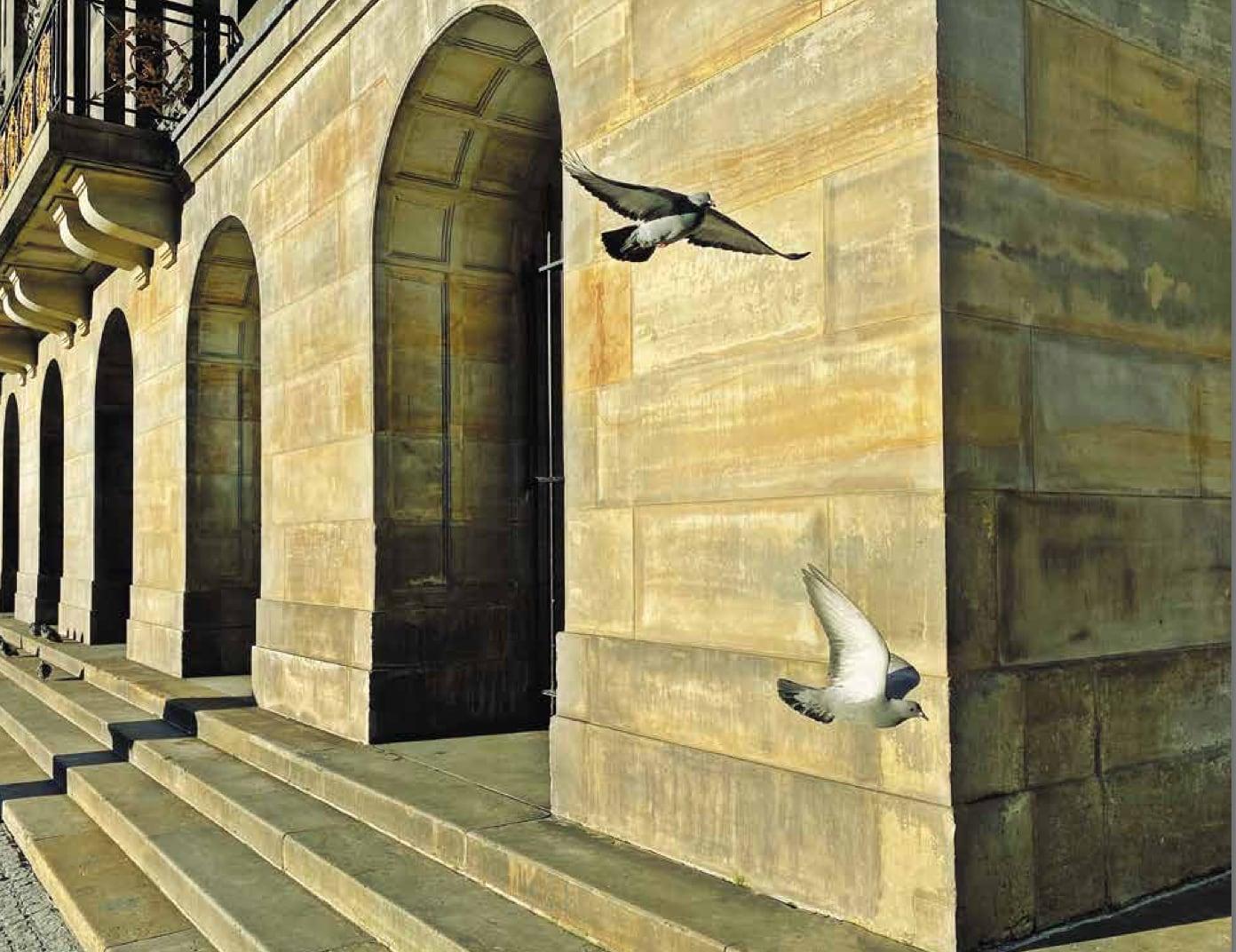 Foto van duiven bij het paleis uit: Het is stil in Amsterdam - Annet de Graaf, isbn 9789043922623