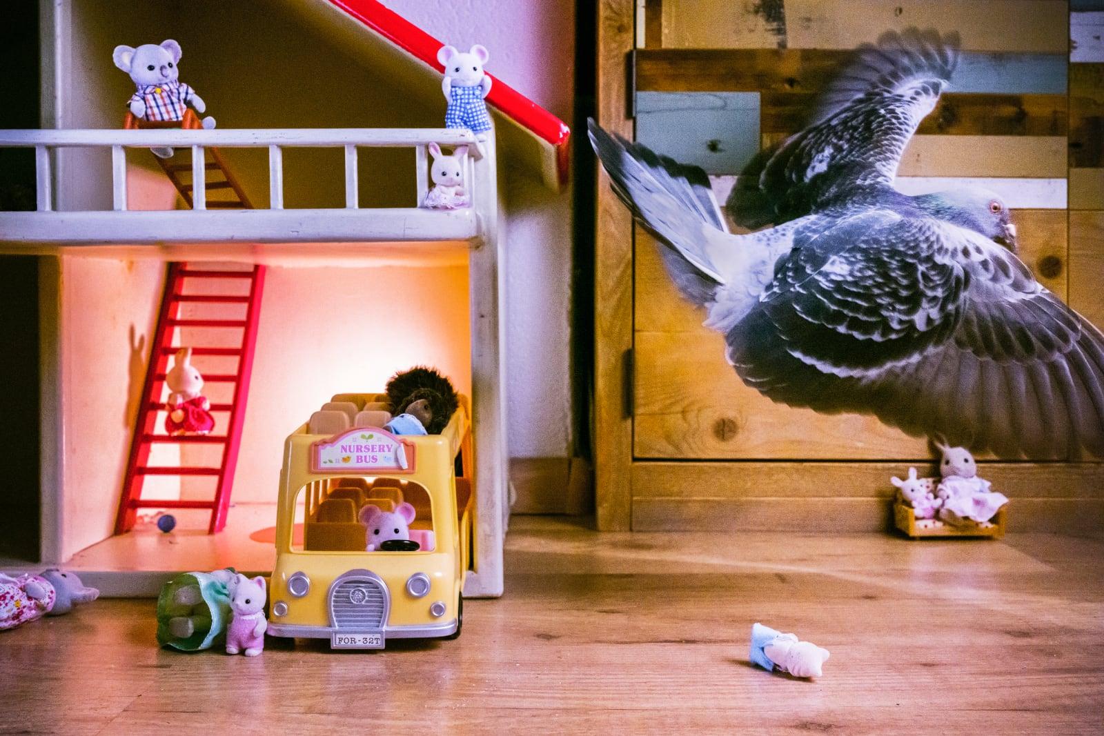 foto: © Jasper Doest - Pandemic Pigeons - A Love Story - genomineerd World Press Photo 2021