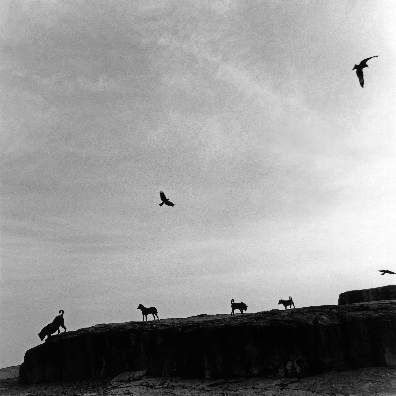 © Graciela Iturbide, Mexico, 2021 Sony World Photography Awards - Perros Perdidos, India, 1998