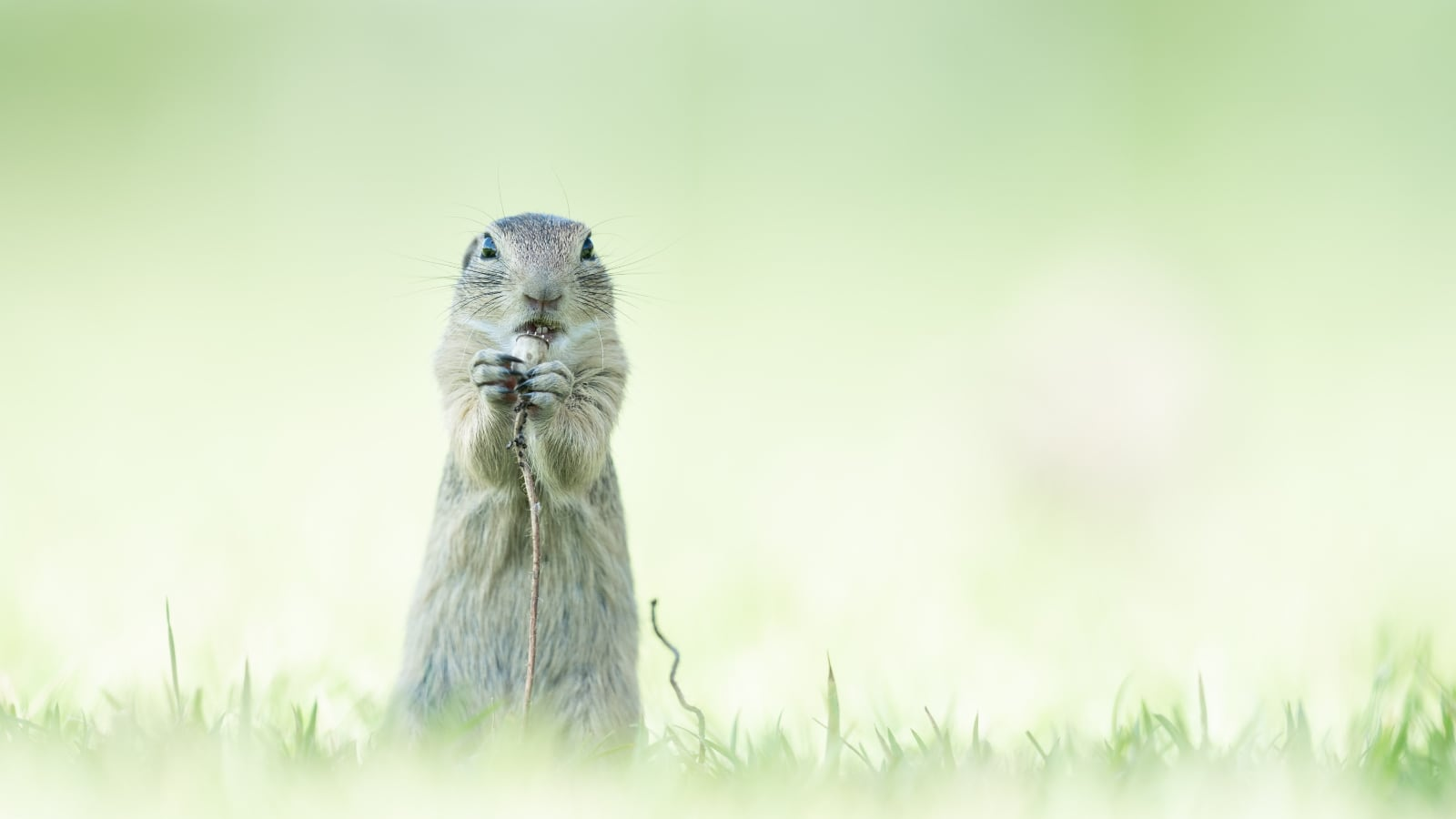 foto: © Alex Pansier, Netherlands, Shortlist, Open, Natural World & Wildlife, 2021 Sony World Photography Awards - konijn eet bloem