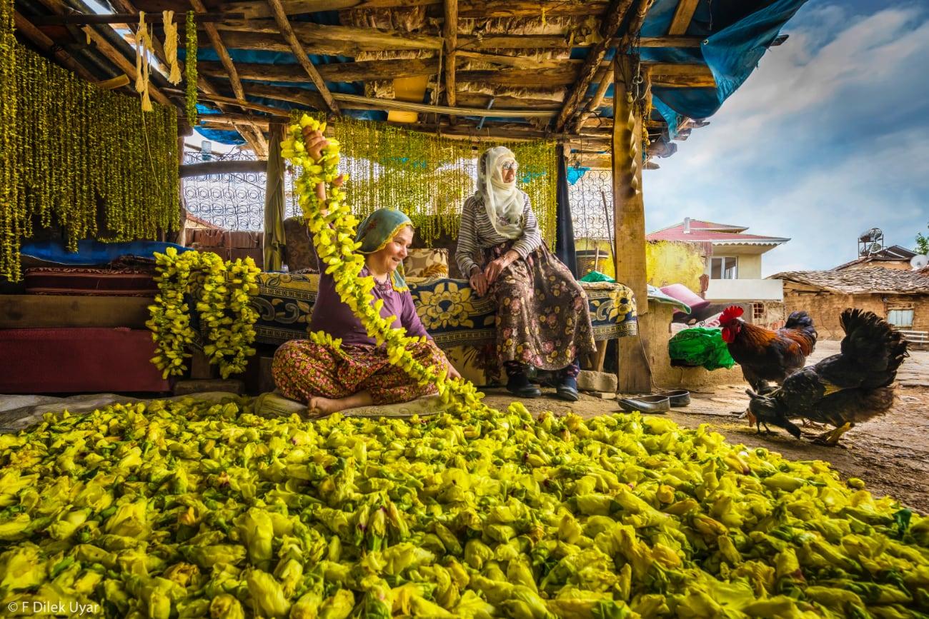 foto: © F Dilek Uyar - Harvest - Drying Okra