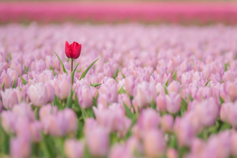 Fotowedstrijd LENTE op Fotografie.nl 2021