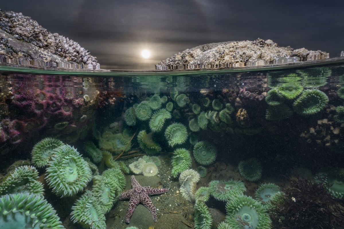 © Keith Ladzinski- Spectacle | National Geographic - Museon