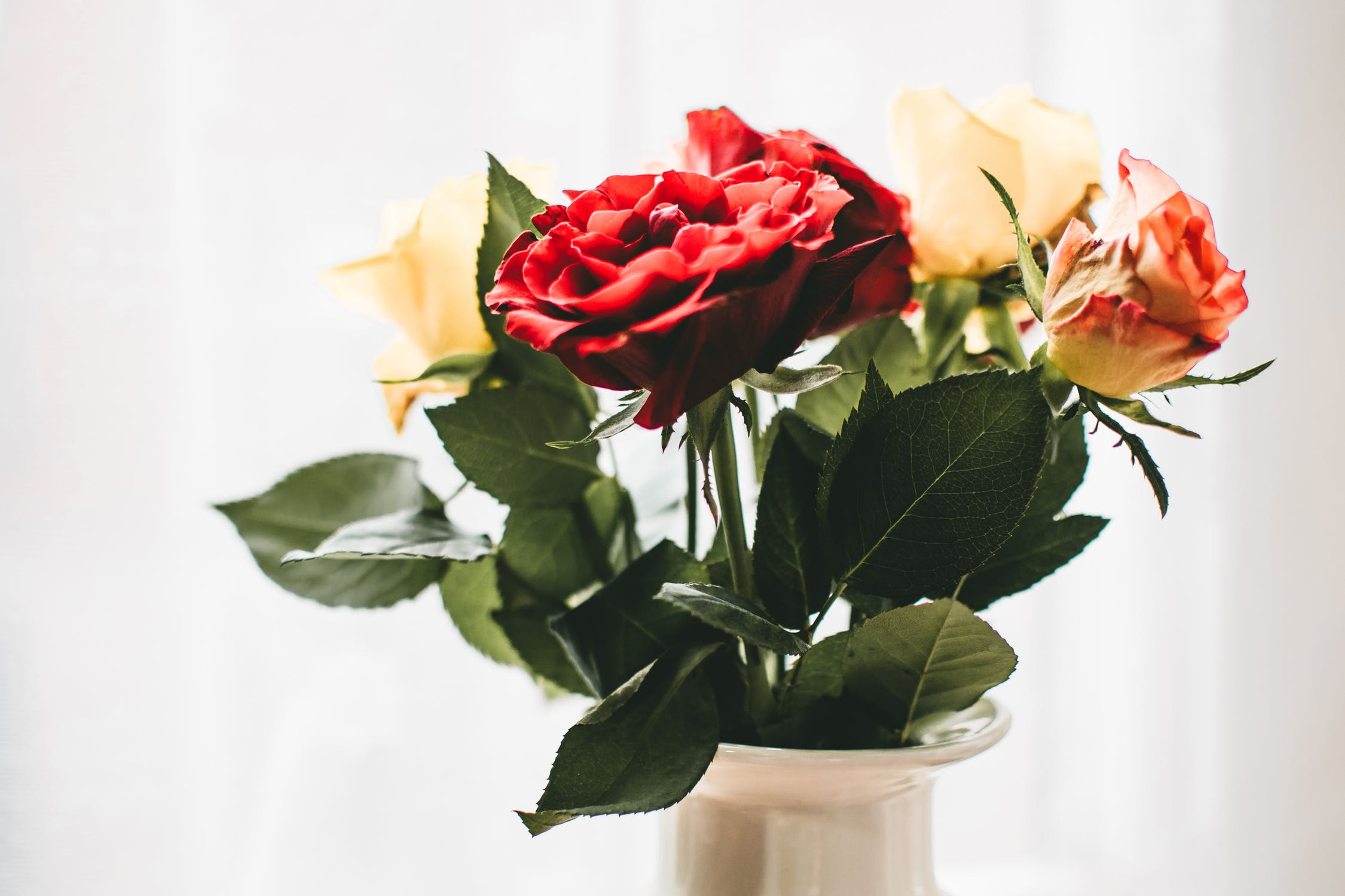 red and peach roses