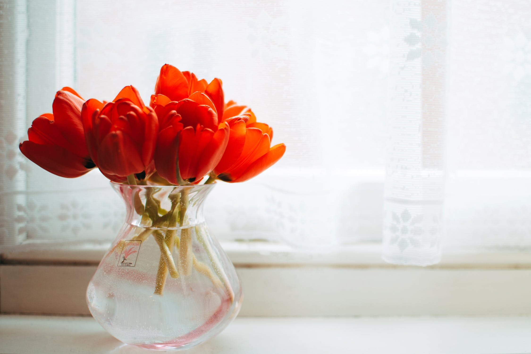 red flowers in vase on windowsill