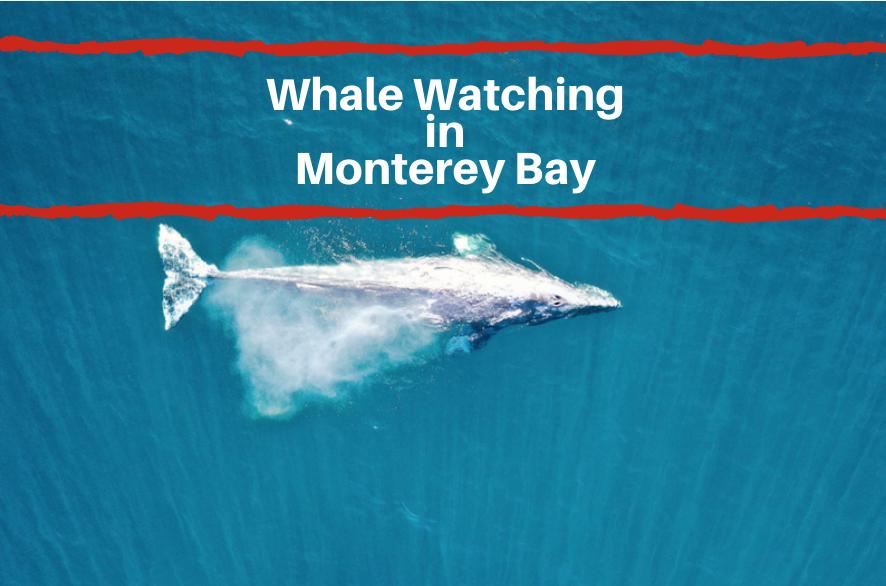 whale watching Monterey CA