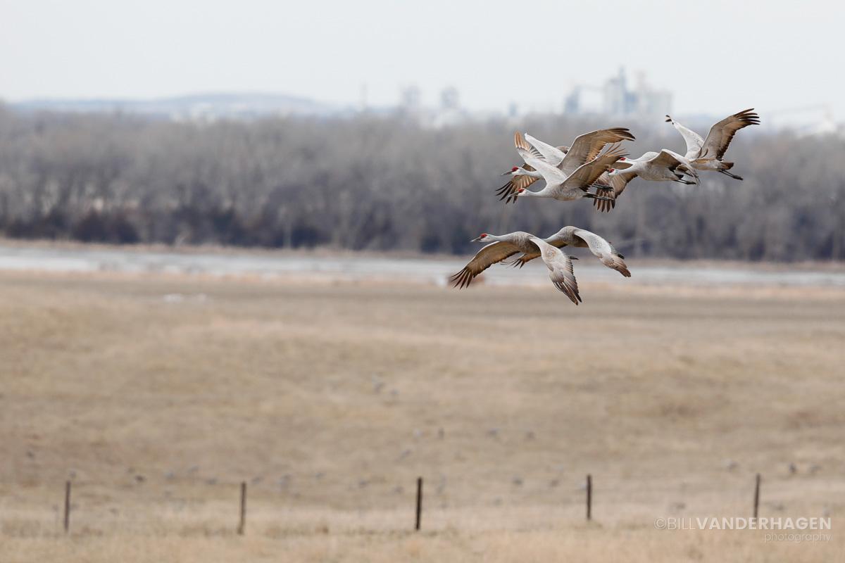 Cranes over the nebraska landscape