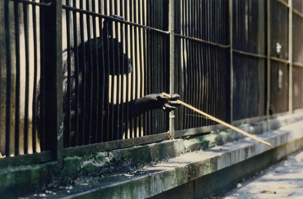 rendez-vous-im-zoo-5