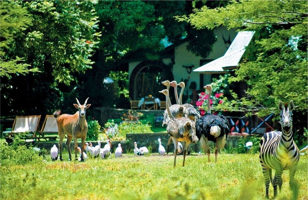 Set in beautiful and tranquil surroundings, the Mount Meru Game Lodge is nestled between the Usa river and the wildlife sanctuary.