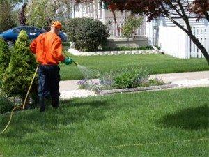 Salt Lake City Weed Control Service