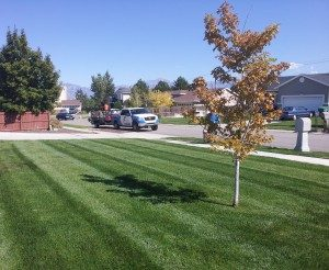 Weekly lawn mowing services in Salt Lake City