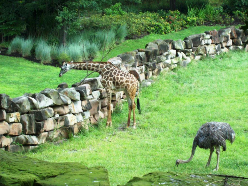 zoo animals graze in a grassy green field in cleveland ohio