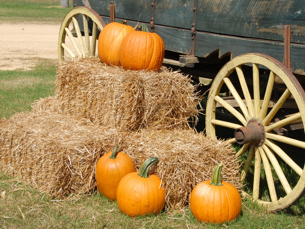 pumpkins stacked on hay bales by a wagon