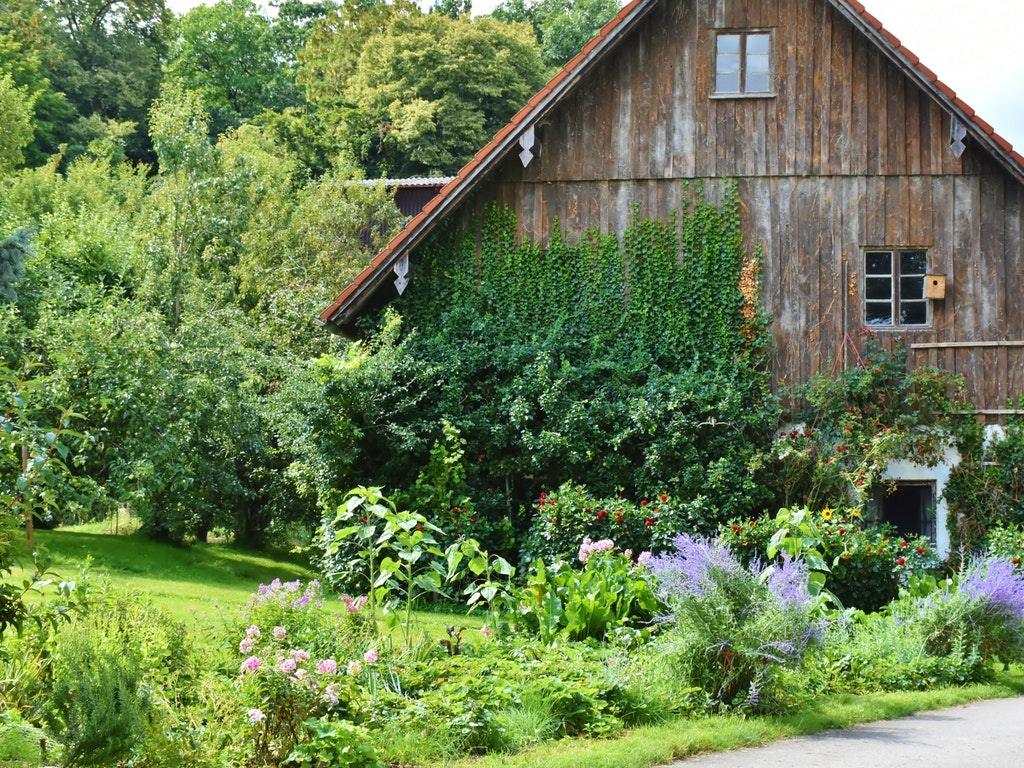 a barn surrounded by plants