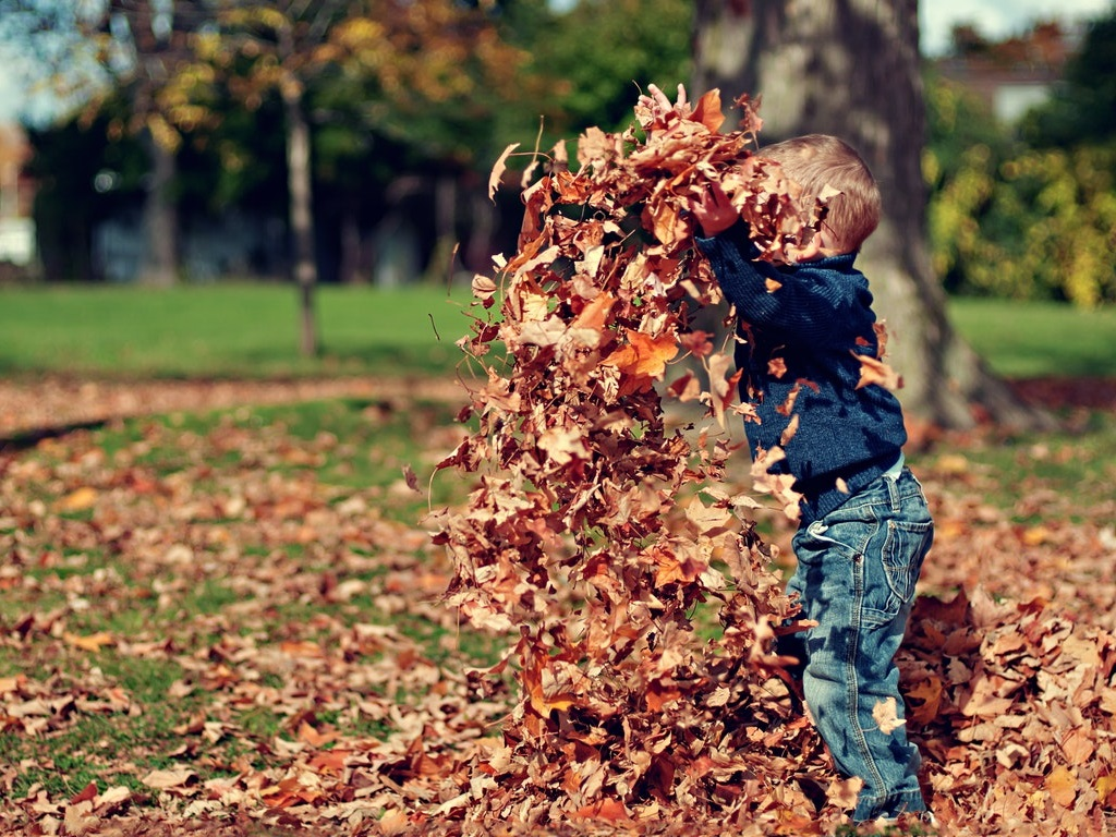 a child playing in fallen leaves