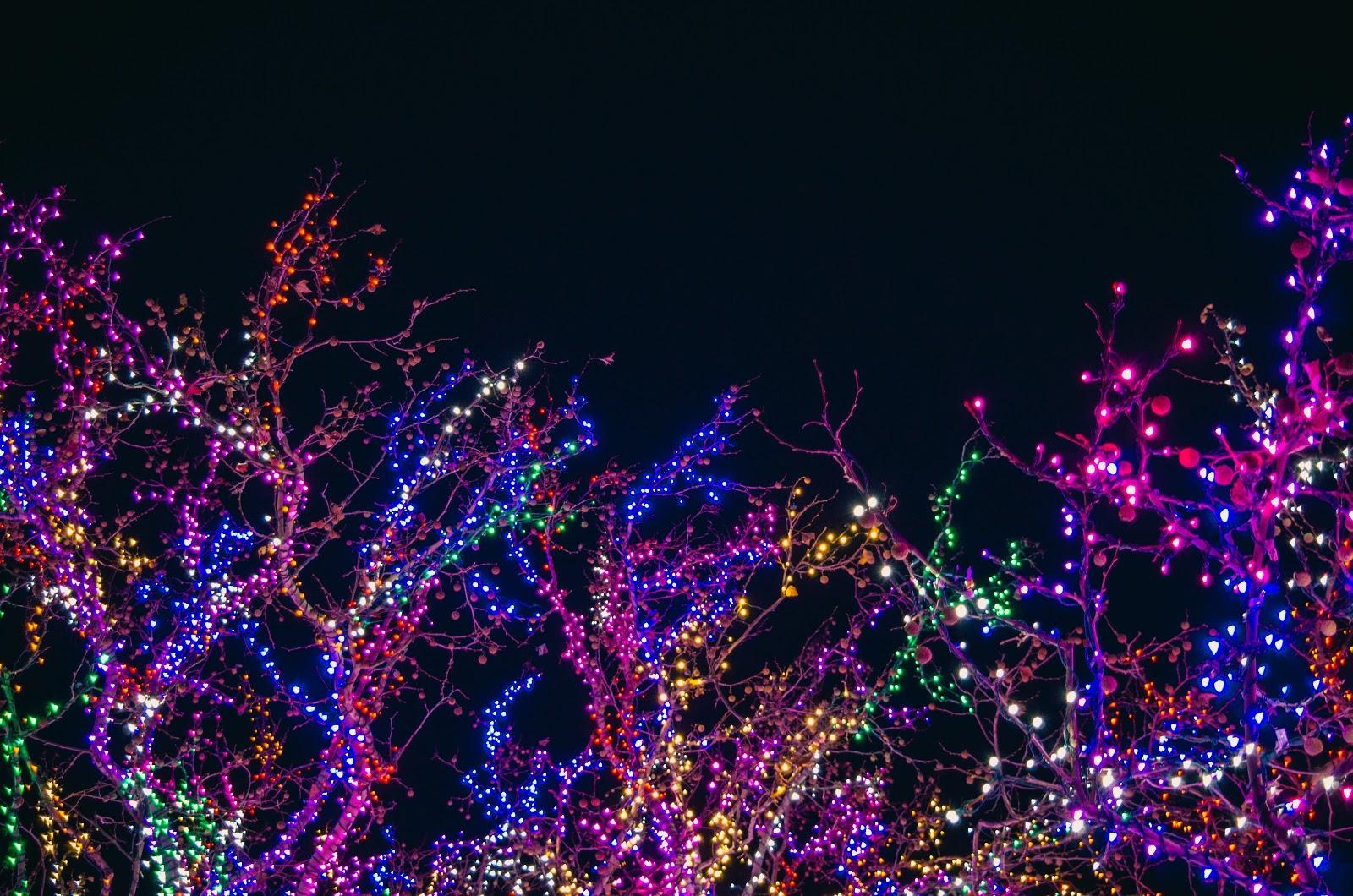 Stunning Holiday Lights on Trees