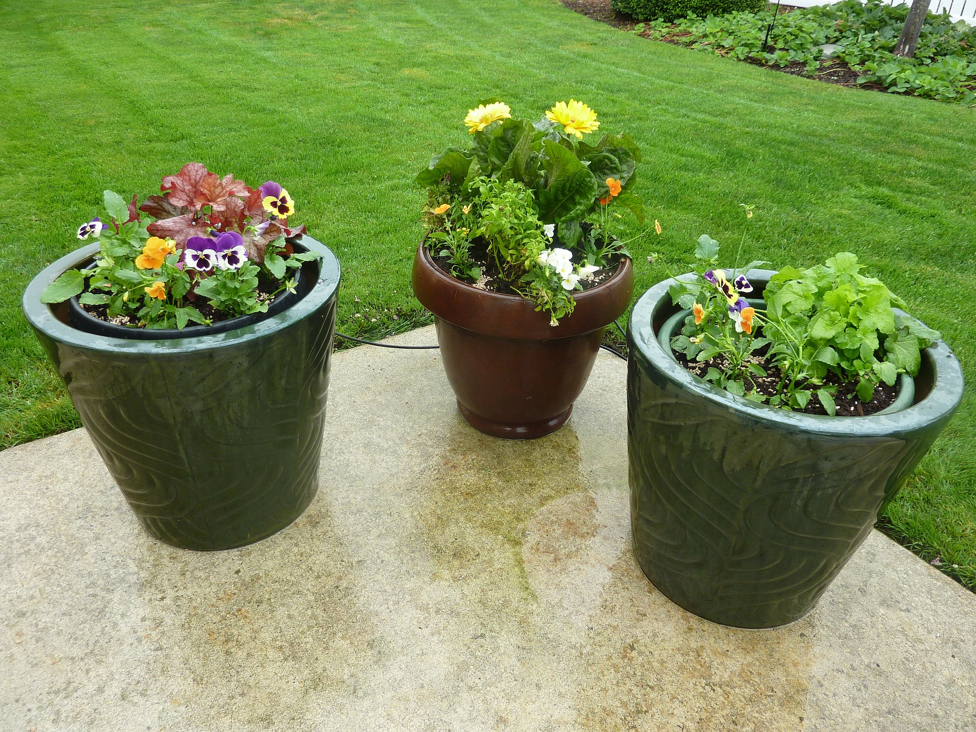 tidy backyard lawn with potted flowers