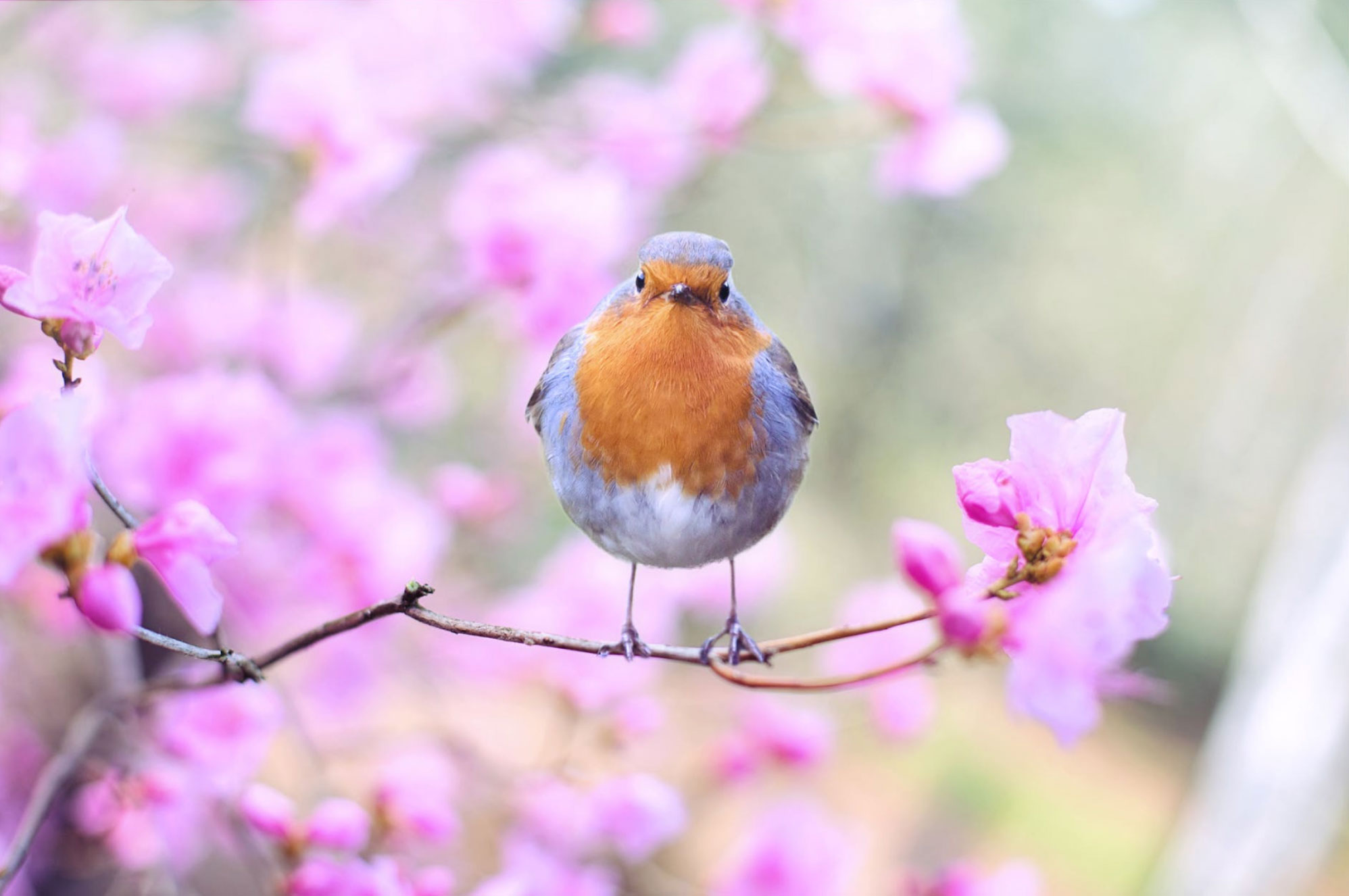 a bird in a flowering spring tree