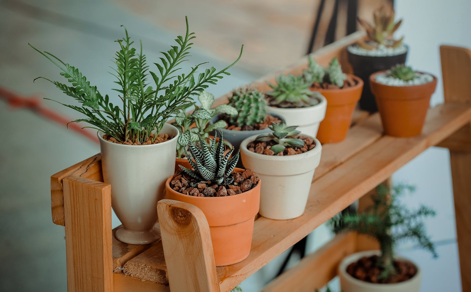 A mini potting bench holding several succulents