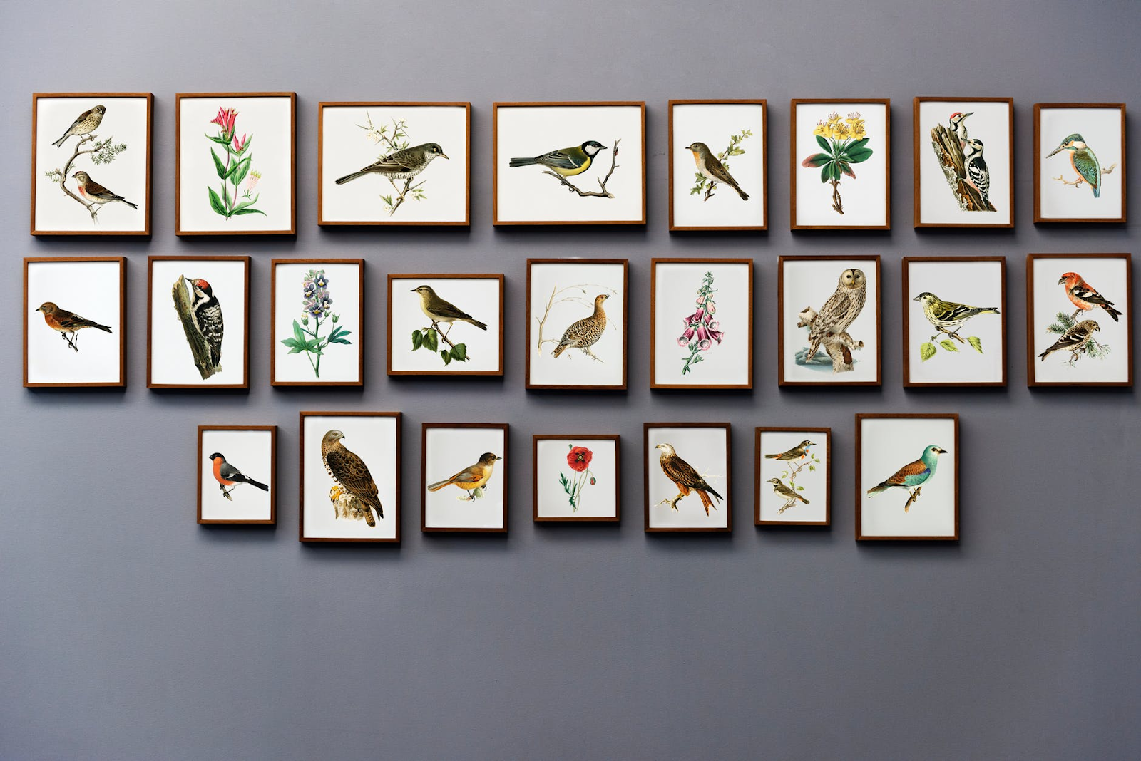 a gray wall with a series of paintings of flowers and birds