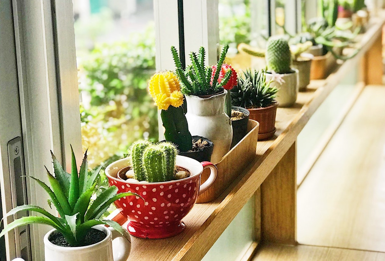 a row of succulents against a window