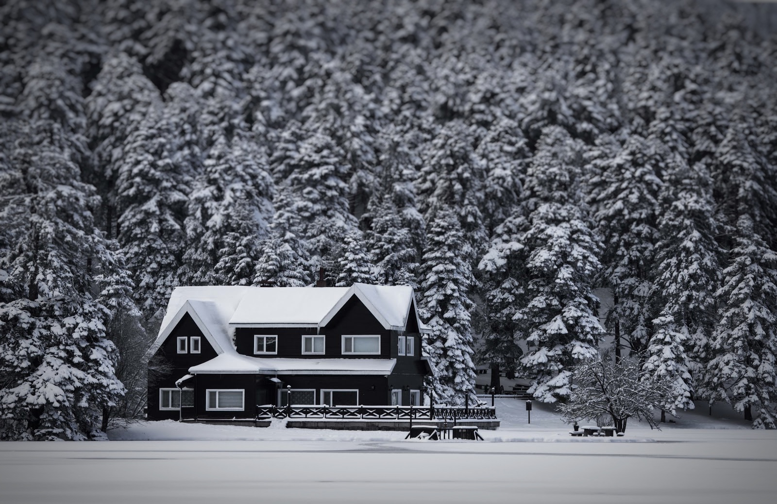home surrounded by snow-covered trees