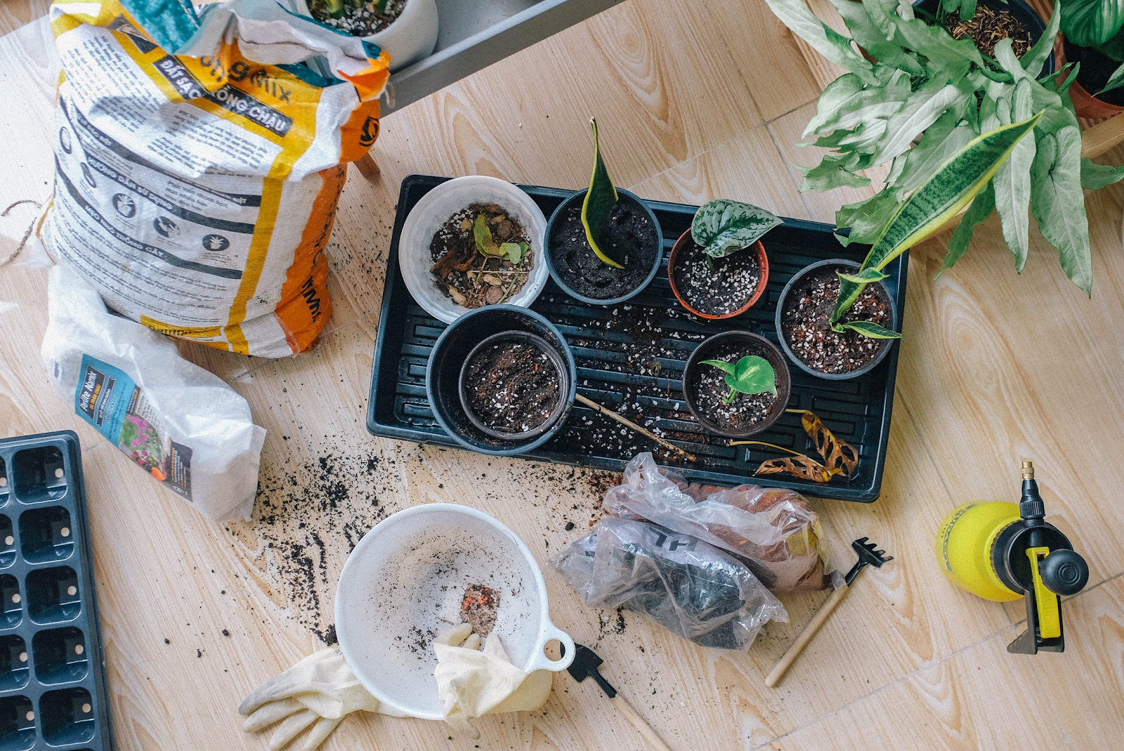 Soil mix and planters for houseplants